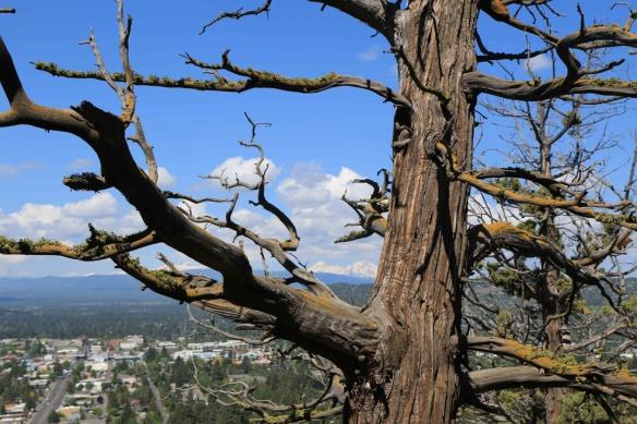 Loved the juniper trees.