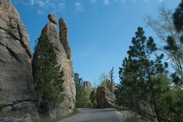 Along the Needles Highway.