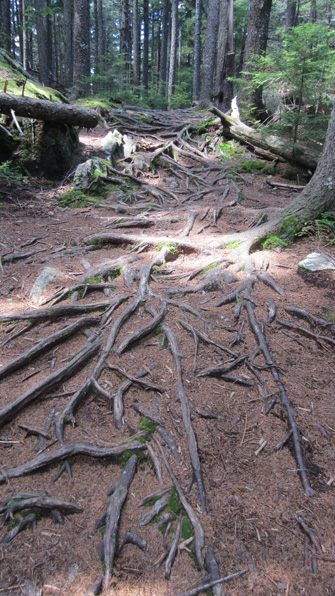 Root patterns