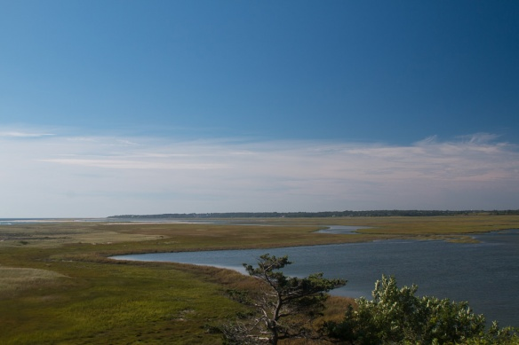 Marshes behind Coast Guard Beach.