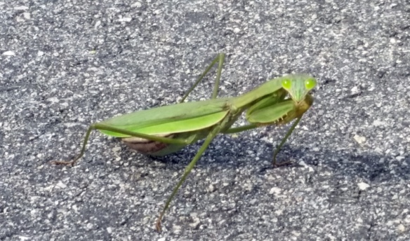This praying mantis was the only other wildlife I saw, his eyes followed me everywhere I moved when I took his picture.