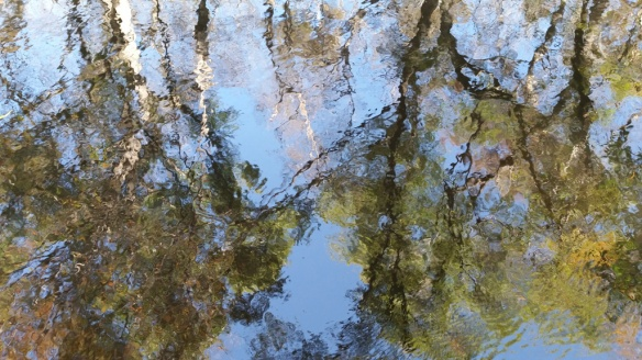 Blackwater reflections