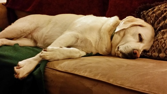 Zoe got to sleep on the couch