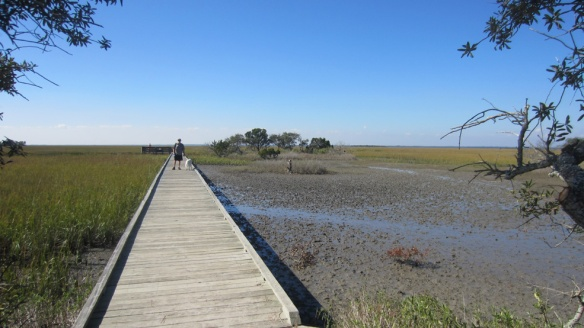 Marsh boardwalk, second section, the mud on the right was the crab neighborhood