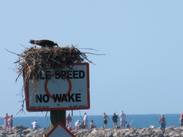 Osprey nest with the twin jetty in Nokomis in the distance