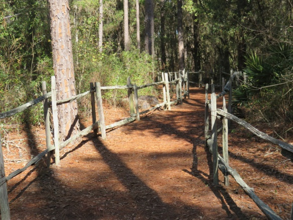 Walking through the pines to the homestead.