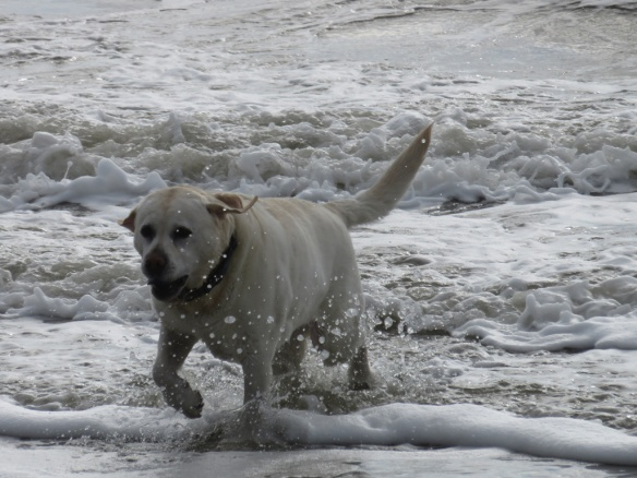 Zoe learned to handle the surf.