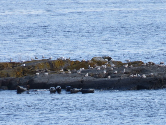 Seals and gulls--they all look cold.