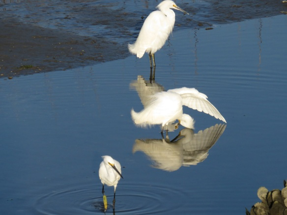 Check out the reflection of the bird in the middle.