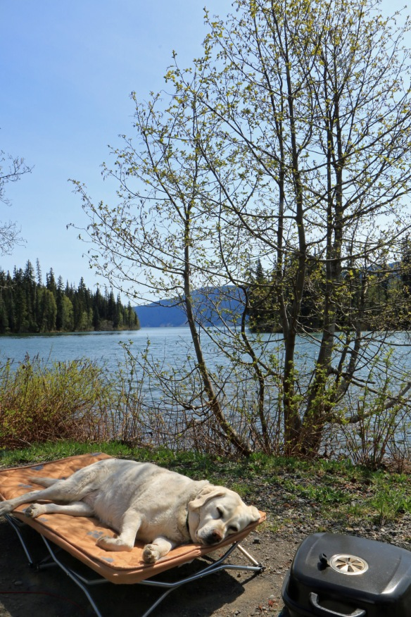 A slice of paradise, Lake Meziadin Provincial Park. British Columbia