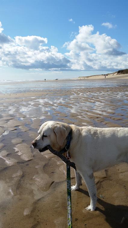 Zoe enjoying Cape Cod