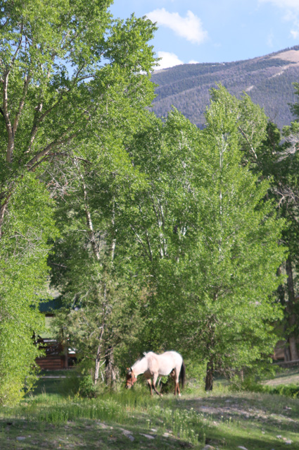 Horse at Dubois, Wyoming private campground