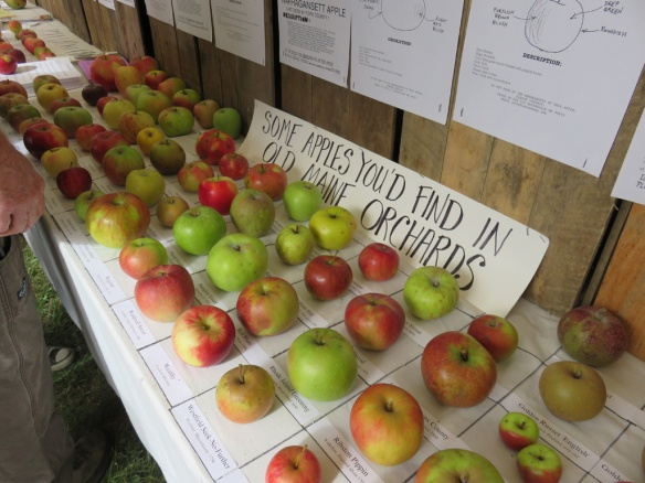 My favorite booth--FEDCO trees--with examples of Maine apple varieties--old and new.