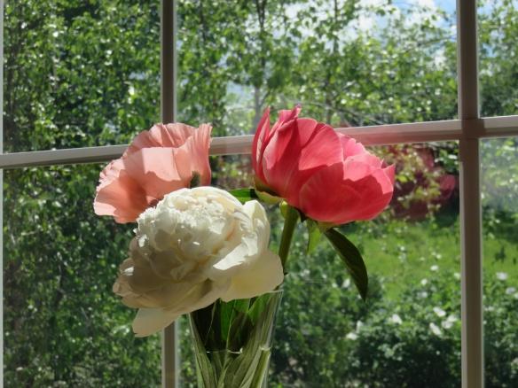 June garden bouquet of peonies and poppies