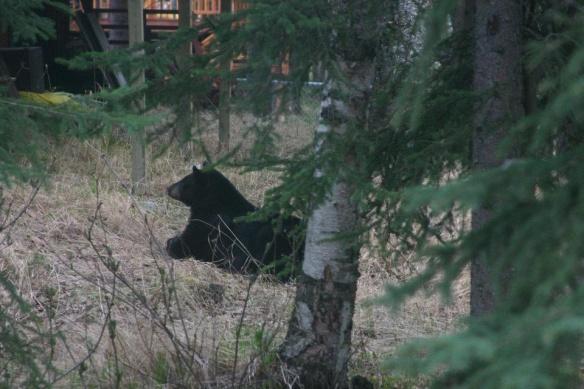 Yard Bear